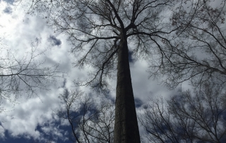 view of the sky from a hammock